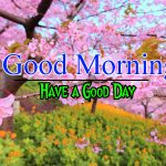 1492+ { Today } Good Morning Images Photo Wallpaper Download